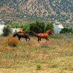 www.horseridingkos.com