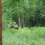 A moose greeted us when we arrived.