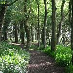  Courtmacsherry Woods quiet colour when we visited but bluebells in spring &amp; flaming orange in au