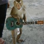 "Monkey ""playing guitar"""