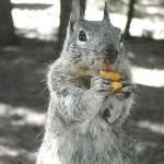  Snacking Squirrel at Hogdon Meadow Campground