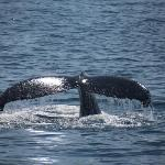 Petit Pasage Whale Watch
