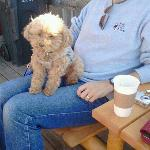  Great coffee &amp; scones! You can bring your pooch and sit on the patio.