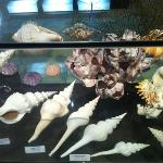 Bali Shell Museum