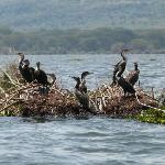 Boat trip on the lake & cormorants