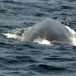 Whales Lanka Private Limited