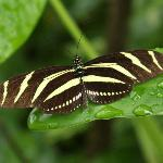 This was the first butterfly we saw