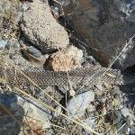  shedded snake skin found in rocks