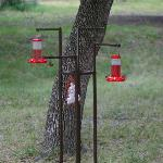 One of the many hummingbird feeders around the property