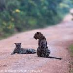 Tissamaharama Safari Advisor- Day Tours