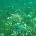Tobago Cays day trip - swimming with turtles