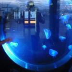 photos of Oceanographic Museum and Sea Aquarium (Muzeum Oceanograficzne i Akwarium Morskie)