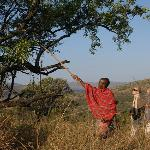 Nduara, situated as it is on Maasai land but part of the Serengeti, is ideal for walking