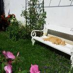 Lazing in the cottage garden