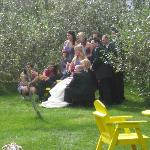 Wedding pictures in our back yard.