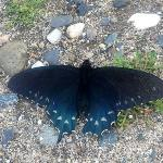 butterfly on side of trail