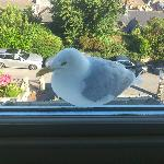  Suite no. 2 - Jacob, our seagull