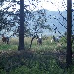 Wildhorse Mountain Guest Ranch Foto