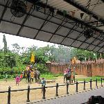  Elephants show