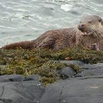 Mull Magic Wildlife - Day Tours