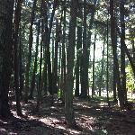 Hartwick Pines State Park