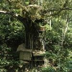 Shola Periyar Tree Houseの写真