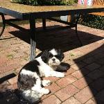 Charley sunning on the patio