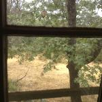  Looking out the back window