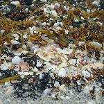 Shelling - the entire beach looks like this