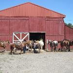 Diamond Hitch Stables