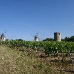 Windmills in the vineyards