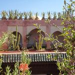  Sur la terrasse du riad, joliment dcore de plantes grasses et cactus