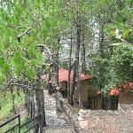 The cottages nestled amongst the tall pine tress