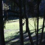 Breakfast with a wallaby and its family