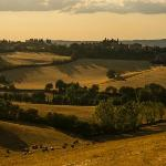 Summer Evening in Tuscany
