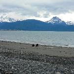 Bald Eagles hunting on the beach below the Alaska Beach House