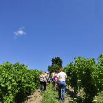 Take a Vineyard Tour - by reservation only, Saturday/Sunday June 1 - Sept 2