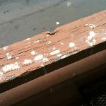 Bird Poo Balcony - it was all over, even furniture