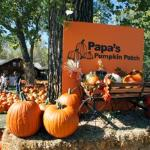 Papa's Pumpkin Patch is open Sept. 10 - Oct. 20, 2012