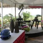 Bonsai and table decor at the restaurant