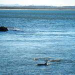 pods of dolphins frolicking near beach and breakwater