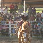  bronc riding