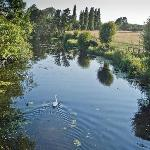 Swan on the River Stour in Dedham Vale