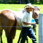 Raul, the Horse Caretaker