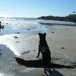  One dog, her beach, her Atlantic Ocean