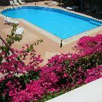 Pool and bouganvillea