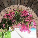  Cycladic architecture and bouganvillea