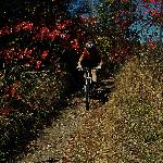 Bike Trail Fall Colours