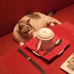 breakfast with hotel's cat
