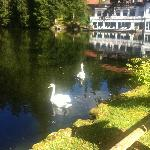 Photo de Hotel Langenwaldsee